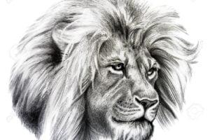 dibujos a lapiz realista dibujosfaciles.es