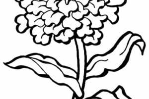 Dibujosfaciles Es Dibujos De Flores Faciles De Colorear