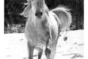 dibujo caballo realista