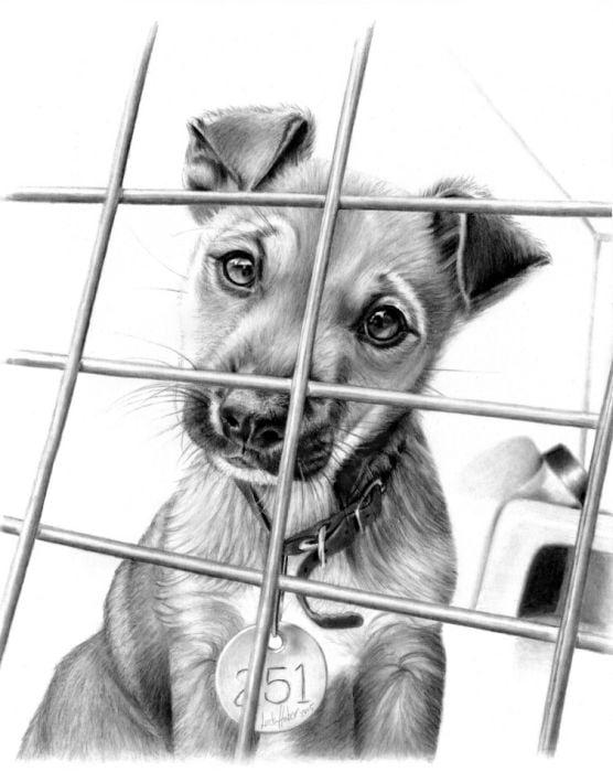 dibujo a lapiz de perro realista