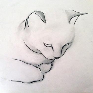 dibujo a lapiz de un gato