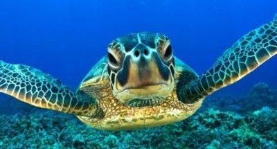 Dibujos marinos tortuga de mar