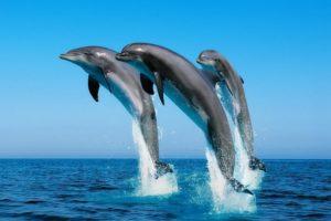 Dibujos marinos delfines