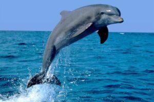 Dibujos marinos delfín