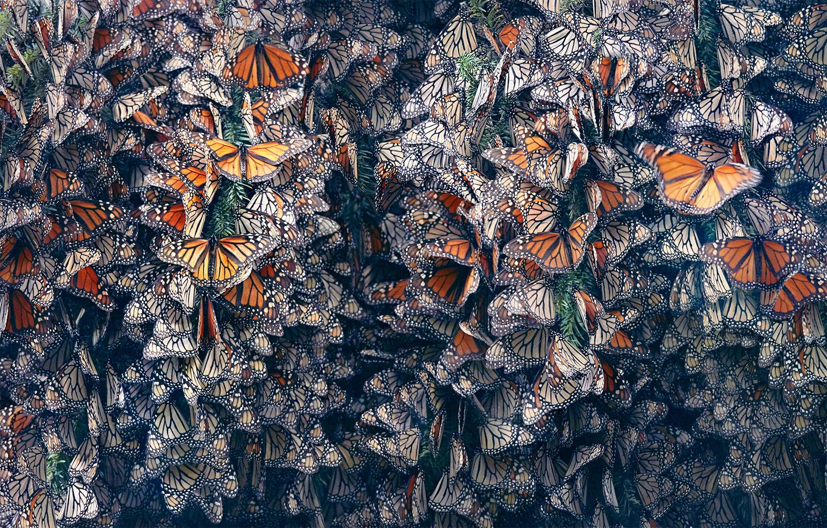 miles de mariposas