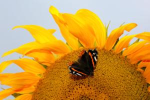 mariposa realista